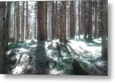 The Forest Lights Metal Print