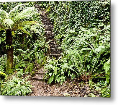 The Forest Stairwell Metal Print by Rae Tucker