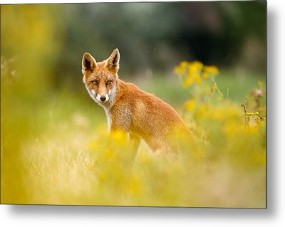The Fox And The Flowers Metal Print by Roeselien Raimond