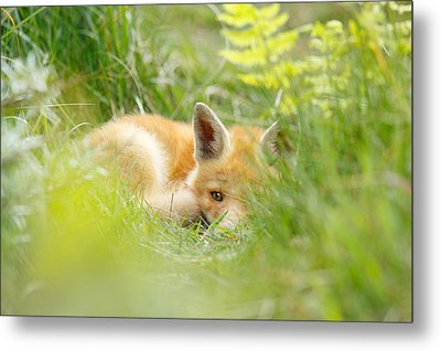 The Fox Kit And The Ferns Metal Print by Roeselien Raimond