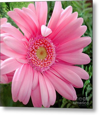 The Friendly Petal Wave Metal Print by Sue Melvin