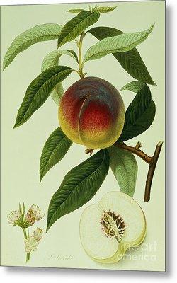 The Galande Peach Metal Print