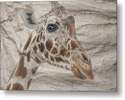 Metal Print featuring the photograph The Giraffe  by Dyle   Warren