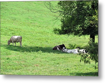 The Girls Hangout Metal Print by Jan Amiss Photography