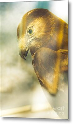 The Glass Case Eagle Metal Print by Jorgo Photography - Wall Art Gallery