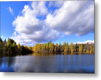 Metal Print featuring the photograph The Golden Forest At Woodcraft by David Patterson