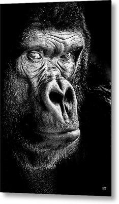 The Gorilla Large Canvas Art, Canvas Print, Large Art, Large Wall Decor, Home Decor Metal Print by David Millenheft