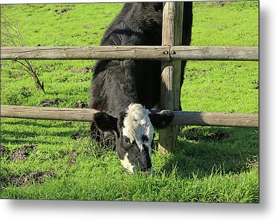Metal Print featuring the photograph The Grass Is Always Greener by Art Block Collections
