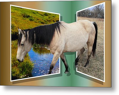 The Grass Is Always Greener On The Other Side Metal Print by Shane Bechler