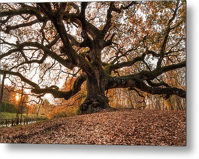 The Great Oak Metal Print