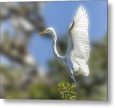 Metal Print featuring the photograph The Great White Egret by Paula Porterfield-Izzo