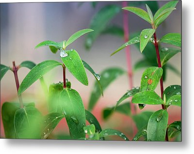 The Green Key Of Life  Metal Print by Nicole Frischlich