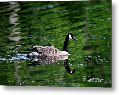 Metal Print featuring the photograph The Green Lake by Paul SEQUENCE Ferguson             sequence dot net