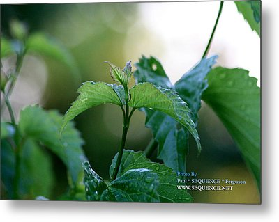 Metal Print featuring the photograph The Green Leaf by Paul SEQUENCE Ferguson             sequence dot net