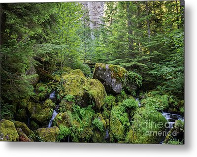 The Green Scene Metal Print by Carrie Cole