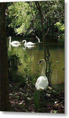 The Guard Swan Metal Print