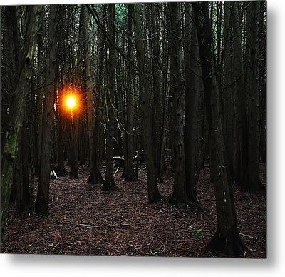 The Guiding Light Metal Print by Debbie Oppermann