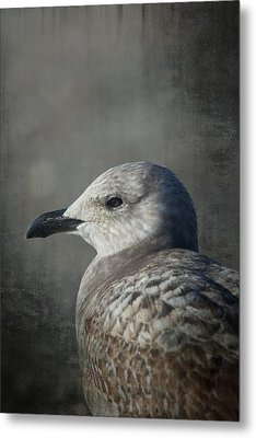 The Gull Metal Print by Karol Livote