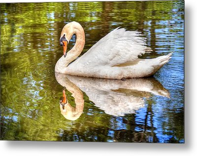 The Hammy Swan Metal Print