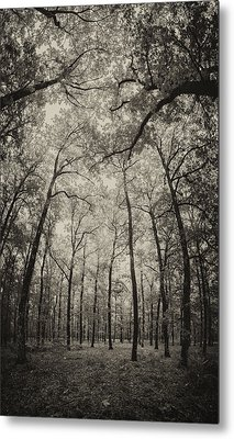 The Hands Of Nature Metal Print by Stavros Argyropoulos