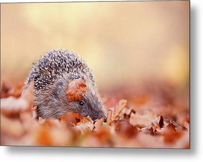 The Happy Hedgehog II Metal Print by Roeselien Raimond