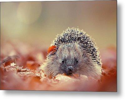 The Happy Hedgehog Metal Print by Roeselien Raimond