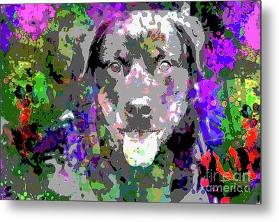 The Happy Rottweiler Metal Print by Jon Neidert