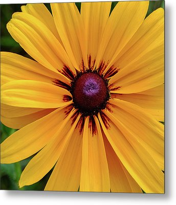 Metal Print featuring the photograph The Heart Of A Flower by Monte Stevens