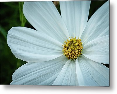 The Heart Of The Daisy Metal Print