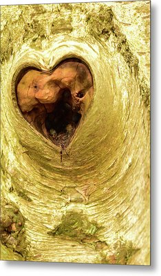 The Heart Of The Tree Metal Print