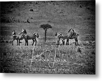 Metal Print featuring the photograph The Herd by Karen Lewis