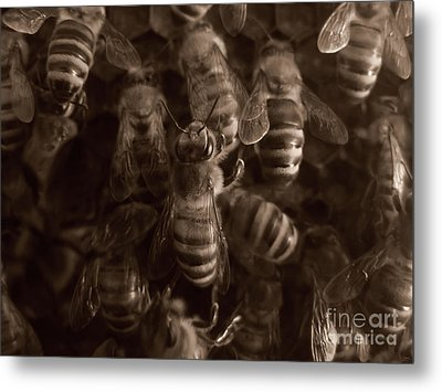 The Hive Metal Print by Jeff Breiman