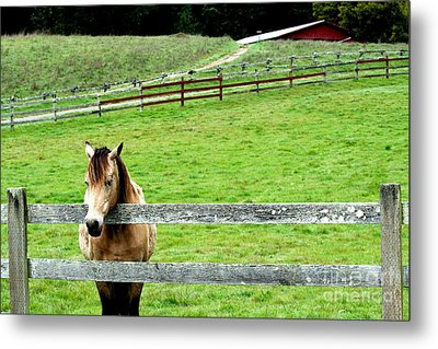 The Horse And The Red Barn . R5913 Metal Print by Wingsdomain Art and Photography