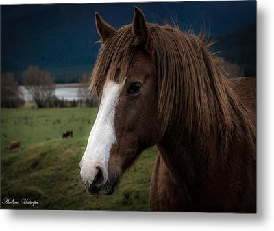 The Horse Metal Print by Andrew Matwijec