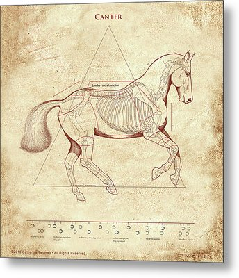The Horse's Canter Revealed Metal Print by Catherine Twomey