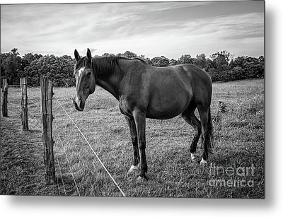 the Horses of Blue Ridge 2 Metal Print by Blake Yeager