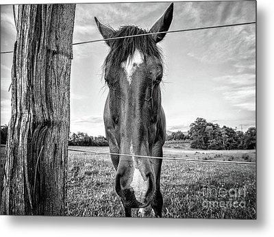 the Horses of Blue Ridge 4 Metal Print by Blake Yeager