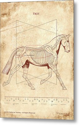 The Horse's Trot Revealed Metal Print