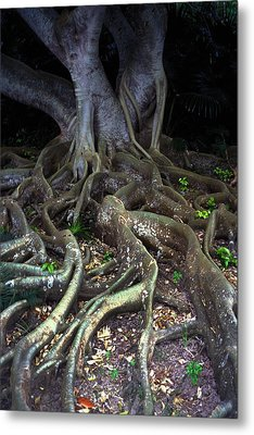 The Hungry Roots Metal Print by Carl Purcell
