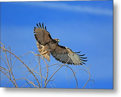 The Hunt Metal Print by Donna Kennedy