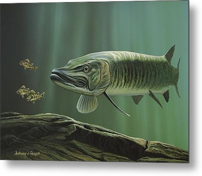 The Hunter - Musky Metal Print