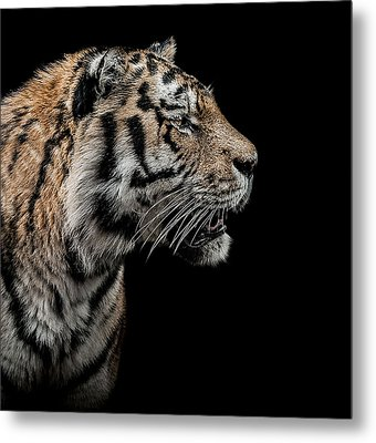 The Hunter Metal Print by Paul Neville