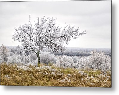 The Ice Princess Metal Print by Dusty Demerson