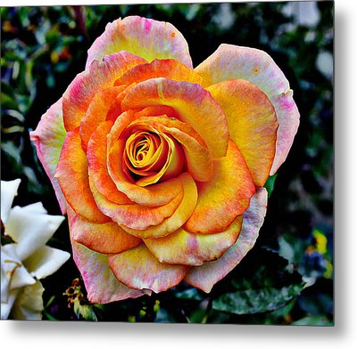 Metal Print featuring the mixed media The Imperfect Rose by Glenn McCarthy