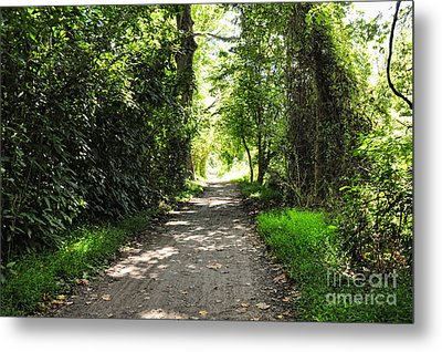 The Journey Metal Print by Paul Ward