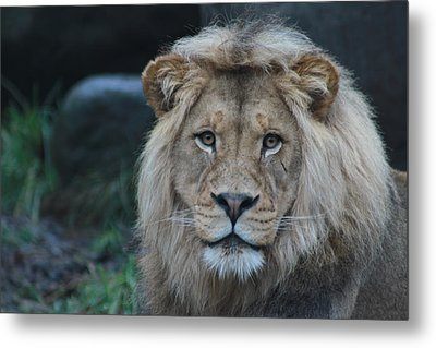 Metal Print featuring the photograph The King by Laddie Halupa