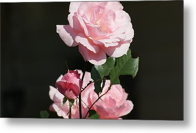 The Lady In Pink Metal Print