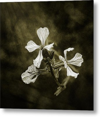 The Last Flowers Of Autumn Metal Print