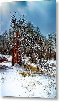 Metal Print featuring the photograph The Last Stand by Shane Bechler