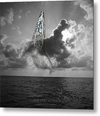 The Last Whale Metal Print by Andy Frasheski